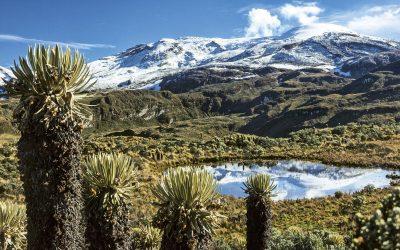 LAS RIQUEZAS NATURALES DE COLOMBIA, SE ENCUENTRAN EN PELIGRO