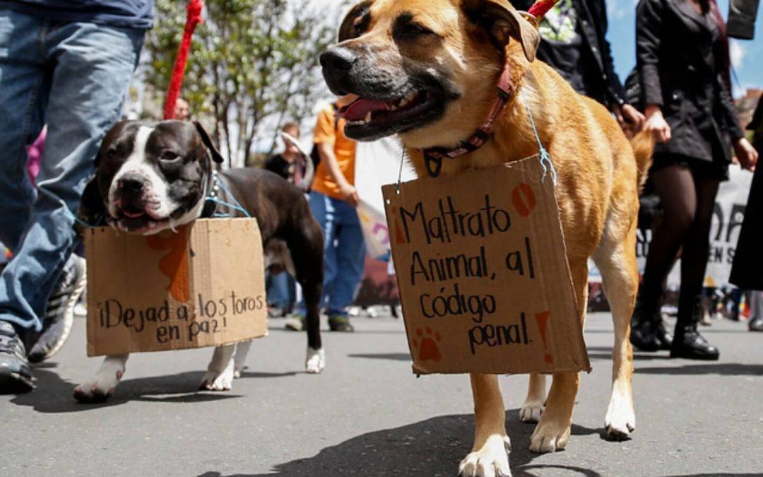 LA INDOLENCIA SOCIAL Y LA INDIFERENCIA DEL ESTADO ANTE EL MALTRATO ANIMAL (COLOMBIA)