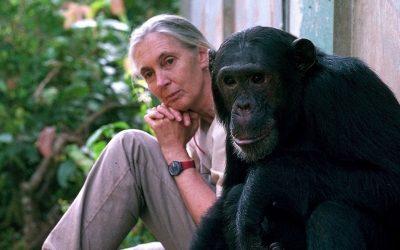 JANE GOODALL, LA VOZ HUMANA DE LOS CHIMPANCÉS